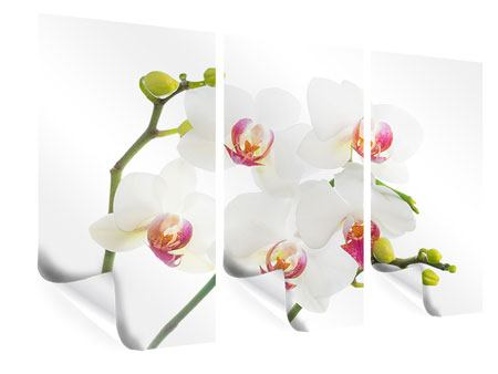 Poster 3-teilig Orchideenliebe