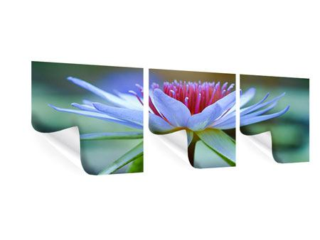 Panorama Poster 3-teilig Pretty Lotus